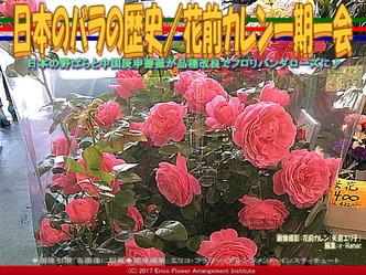 日本のバラの歴史(2)/花前カレン画像01