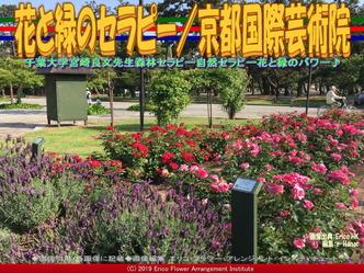 花と緑のセラピー(6)/京都国際芸術院画像02 ▼画像クリックで640x480pxlsに拡大@エリ子花前カレン