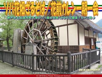ソバ花畑ざるそば(2)/花前カレン画像02