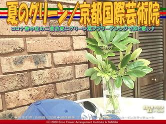 夏のグリーン(3)/京都国際芸術院画像01 ▼画像クリックで640x480pxlsに拡大@北洞院エリ子花前カレン