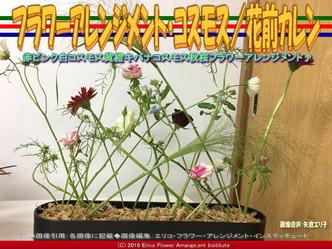 フラワーアレンジメント・コスモス/花前カレン画像01