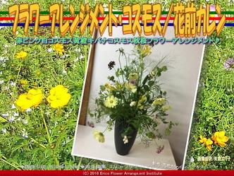 フラワーアレンジメント・コスモス/花前カレン画像03