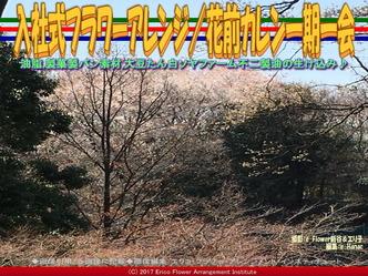 入社式フラワーアレンジ(4) /花前カレン一期一会画像03