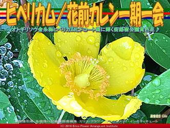 ヒペリカム/花前カレン一期一会画像01