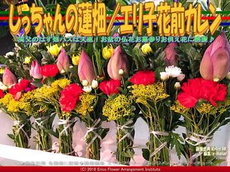 じっちゃんの蓮畑(4)/エリ子花前カレン画像02 ▼画像クリックで640x480pxlsに拡大@エリ子花前カレン