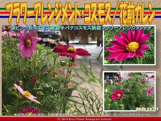 フラワーアレンジ・コスモス(2)/花前カレン画像02