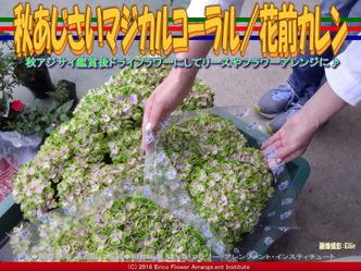 秋アジサイマジカルコーラル/花前カレン画像02