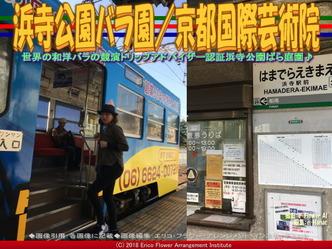 浜寺公園バラ園(5)/京都国際芸術院画像02 ▼画像クリックで640x480pxlsに拡大@エリ子花前カレン
