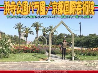 浜寺公園バラ園(6)/京都国際芸術院画像01 ▼画像クリックで640x480pxlsに拡大@エリ子花前カレン