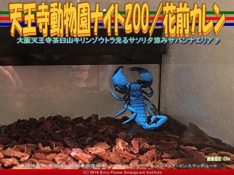 天王寺動物園ナイトZOO(2)/花前カレン画像02
