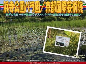 浜寺公園バラ園(7)/京都国際芸術院画像02 ▼画像クリックで640x480pxlsに拡大@エリ子花前カレン
