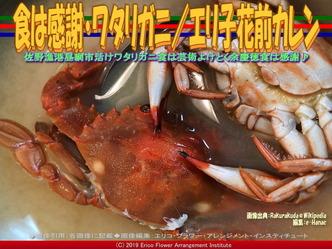 食は感謝・ワタリガニ(2)/エリ子花前カレン画像02 ▼画像クリックで640x480pxlsに拡大@エリ子花前カレン
