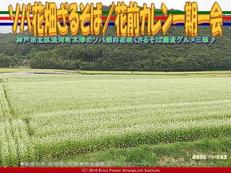 ソバ花畑ざるそば/花前カレン一期一会画像02