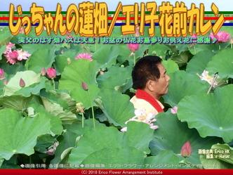 じっちゃんの蓮畑(5)/エリ子花前カレン画像01 ▼画像クリックで640x480pxlsに拡大@エリ子花前カレン