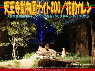 天王寺動物園ナイトZOO(2)/花前カレン画像01