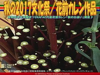 秋の2017文化祭(3)/花前カレン作品画像01▼画像クリックで640x480pxlsに拡大@エリ子花前カレン