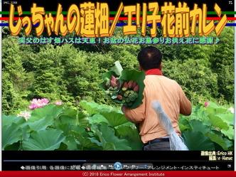 じっちゃんの蓮畑(2)/エリ子花前カレン画像02 ▼画像クリックで640x480pxlsに拡大@エリ子花前カレン