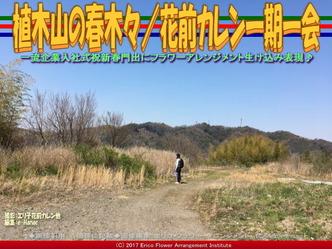 植木山の春木(8)/花前カレン一期一会画像03