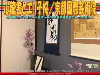 心龍書とエリ子桜(3)/京都国際芸術院画像01 ▼画像クリックで640x480pxlsに拡大@北洞院エリ子花前カレン