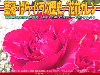 ばら・バラ・薔薇の歴史(2)/花前カレン画像01
