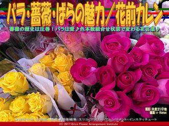 バラ・薔薇・ばらの魅力/花前カレン画像01