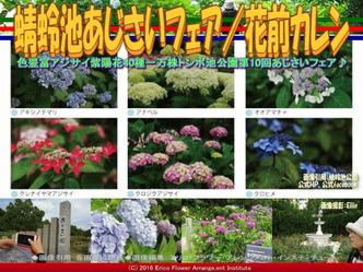 蜻蛉池あじさいフェア/花前カレン画像02