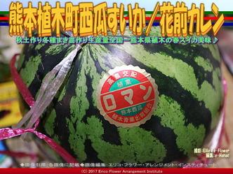 熊本植木町西瓜すいか(6)/花前カレン画像01