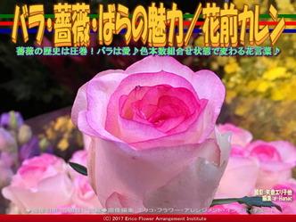 バラ・薔薇・ばらの魅力/花前カレン画像02