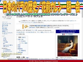 日本のバラの歴史(7)/花前カレン画像01
