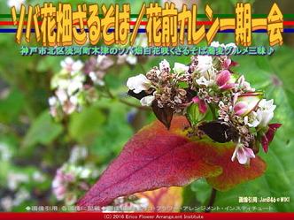 ソバ花畑ざるそば(3)/花前カレン画像01