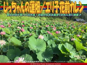 じっちゃんの蓮畑(9)/エリ子花前カレン画像02 ▼画像クリックで640x480pxlsに拡大@エリ子花前カレン