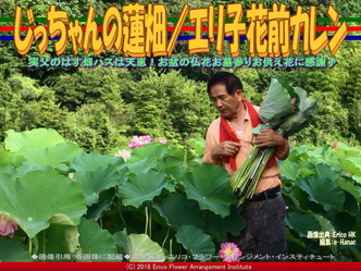 じっちゃんの蓮畑(3)/エリ子花前カレン画像01 ▼画像クリックで640x480pxlsに拡大@エリ子花前カレン