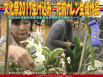 文化祭2017生け込み/上田順子画像01 ▼画像クリックで640x480pxlsに拡大@エリ子花前カレン