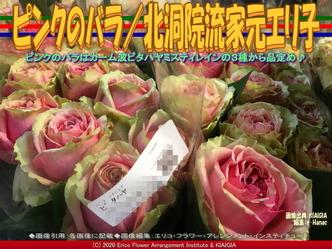 ピンクのバラ(3)/北洞院流家元エリ子画像01 ▼画像クリックで640x480pxlsに拡大@北洞院エリ子花前カレン