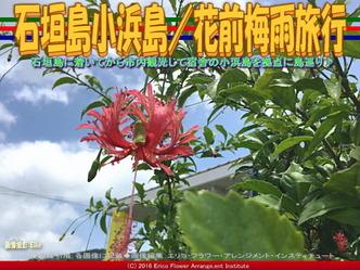 石垣島小浜島/花前梅雨旅行画像03