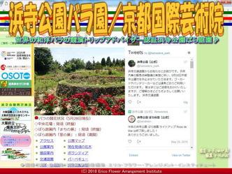浜寺公園バラ園(2)/京都国際芸術院画像01 ▼画像クリックで640x480pxlsに拡大@エリ子花前カレン