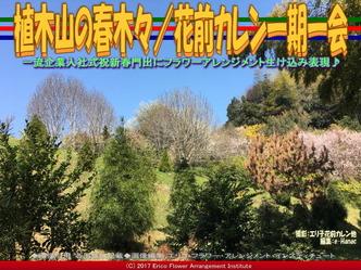 植木山の春木(6)/花前カレン一期一会画像03