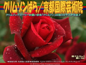 クリムゾンばら(8)/京都国際芸術院画像01 ▼画像クリックで640x480pxlsに拡大@エリ子花前カレン