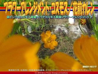 フラワーアレンジ・コスモス(2)/花前カレン画像03