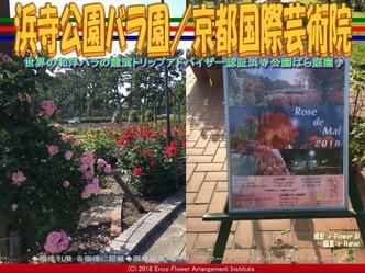 浜寺公園バラ園(4)/京都国際芸術院画像01 ▼画像クリックで640x480pxlsに拡大@エリ子花前カレン