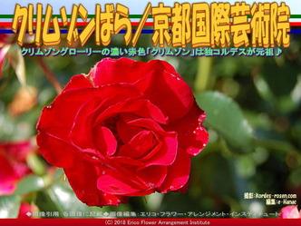 クリムゾンばら(2)/京都国際芸術院画像01▼画像クリックで640x480pxlsに拡大@エリ子花前カレン