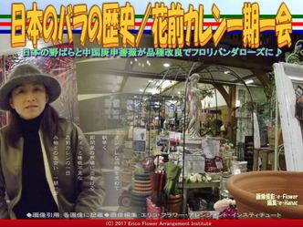 日本のバラの歴史(8)/花前カレン画像03