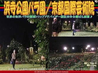 浜寺公園バラ園(4)/京都国際芸術院画像02 ▼画像クリックで640x480pxlsに拡大@エリ子花前カレン