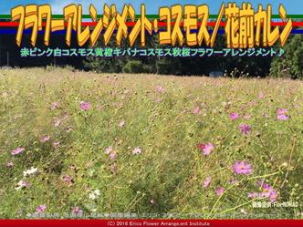 コスモス・フラワーアレンジ(3)/花前カレン画像02