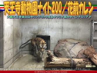 天王寺動物園ナイトZOO(2)/花前カレン画像03