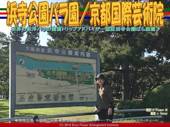 浜寺公園バラ園/京都国際芸術院画像01▼画像クリックで640x480pxlsに拡大@エリ子花前カレン