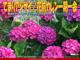 てまりアジサイ(3)/花前カレン画像01