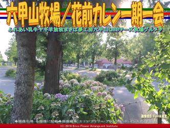 六甲山牧場/花前カレン一期一会画像02