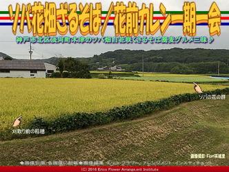ソバ花畑ざるそば/花前カレン一期一会画像03