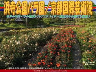 浜寺公園バラ園(8)/花前@京都国際芸術院画像02▼画像クリックで640x480pxlsに拡大@エリ子花前カレン